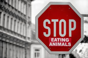 stop manger animaux