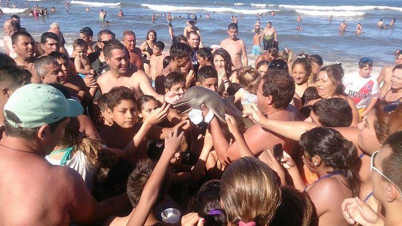Bébé dauphin sorti de l'eau pour un selfie