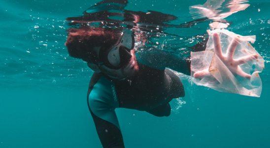 Un plongeur ramasse un déchet plastique dans l'eau