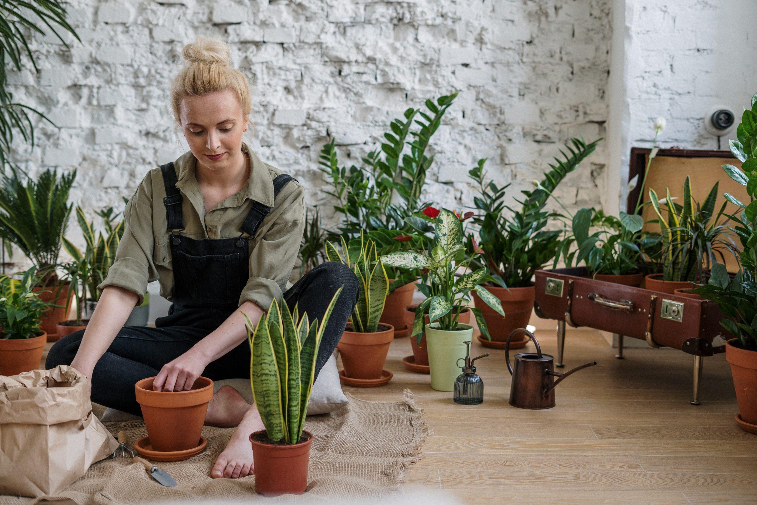 Les bienfaits du jardinage : les box de jardinage