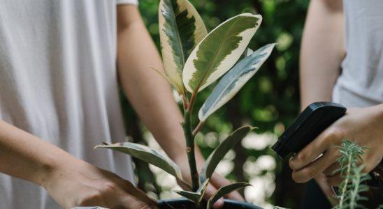 Box de jardinage : idéales pour la ville